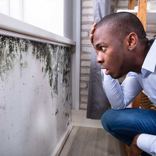 HIC mold inspection - Home Inspection Carolina - Top Home Inspectors in Charlotte, Raleigh, Asheville.